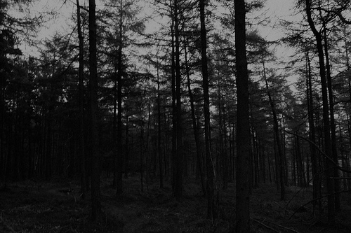 black and white, creepy, dark, scary, woods