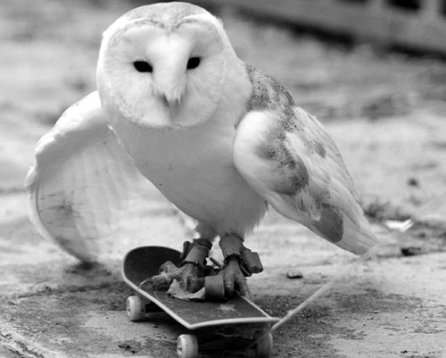 black and white, owl, skate board