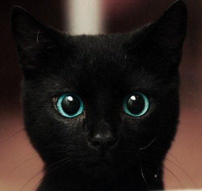 black, blue, cat, cute, eyes