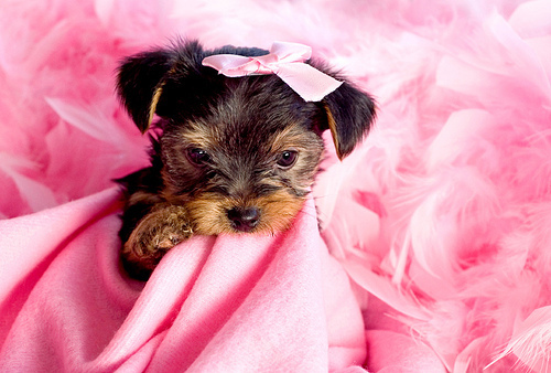 black, cool, cute, photography, pink, puppy