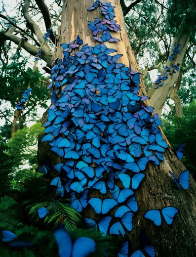 blue, butterfly, nature, papillon, tree