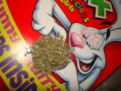 bob marley, bunny, cereals, cigarrete, cocaine, delicius, drug, drugs, drunk, fuck, fun, great, high, joint, kid, kids, lsd, marihuana, nose, red eyes, smoke, trix, weed, white
