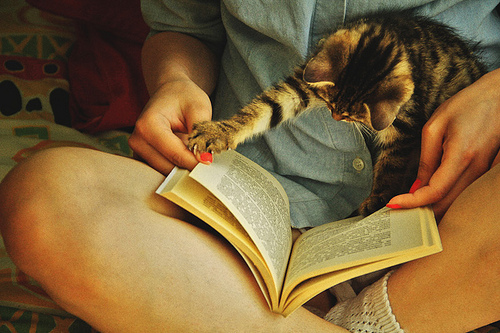 book, cat, girl, sweet