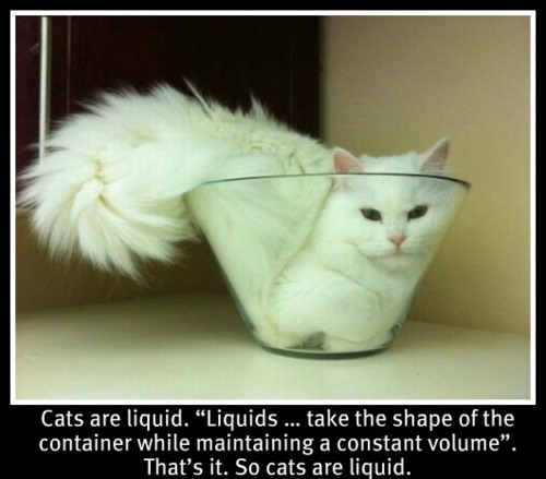 bowl, cat, cute, funny, liquid
