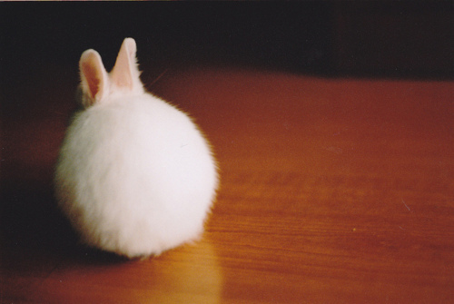 bunny, cute, photo, white