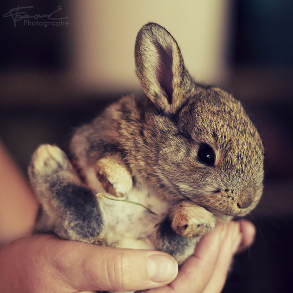 bunny, cute, photography, rabbit