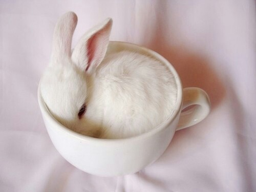 animals, bunny, cute, pink, teacup, tiny, white