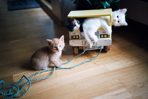 cat, cats, cute, kittens, lol, lovely, vintage