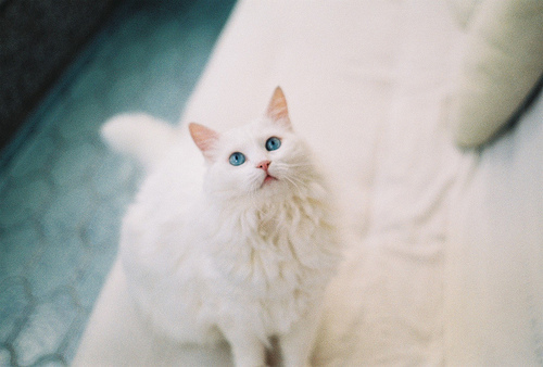 cat, cute, eyes, photography, white