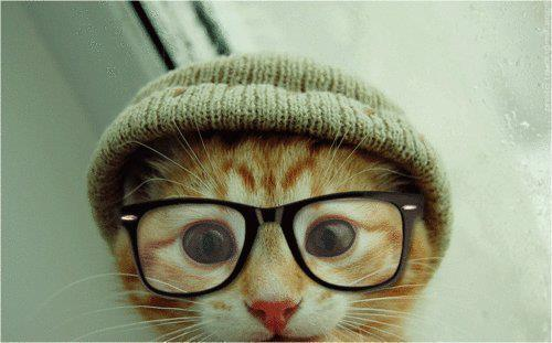 cat, cute, glasses, hat, kitten, love, makes you happy