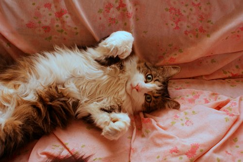 cat, cute, photography, pink, vintage