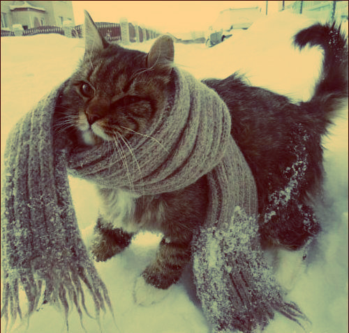 cat, cute, photography, scarf, snow, water, winter