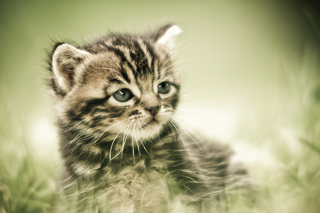 cat, kitten, photography
