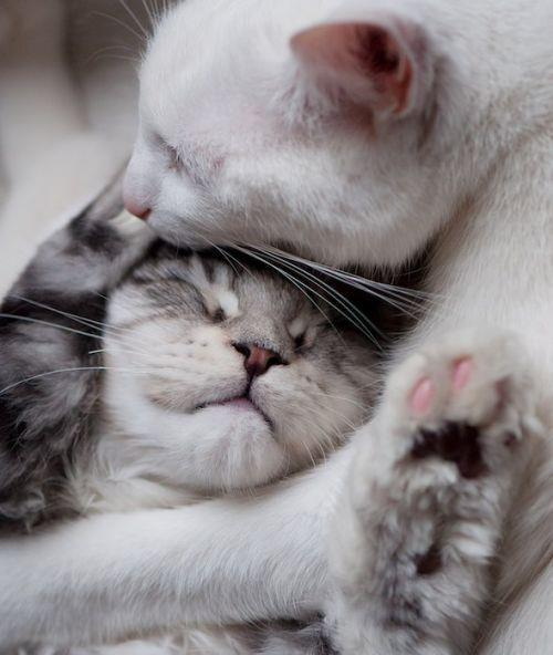cats, cute, love