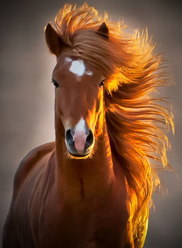 cavalo, cute, cute images, fotos fofas, imagens fofas, kawaii, olhar 43, we heart it