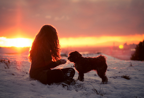 cold, cute, dog, friends, girl, love, puppy, snow, sun, sunset, winter