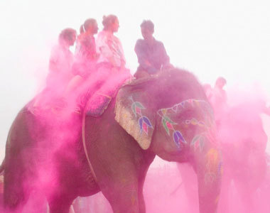 color, cool, elephant, girls , kate spade
