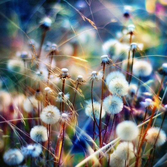 colorful, daisy, fluffly, photography, pretty