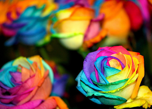 colorful, flowers, photography, pretty, rainbow, roses