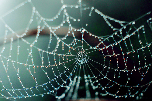 cool, drops, nice, photography, web