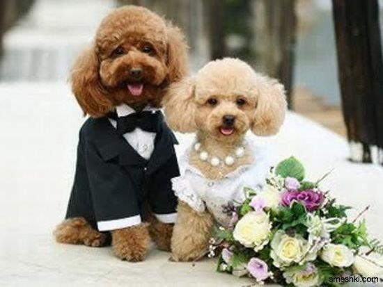 couples, cute, dog, puddle, wedding