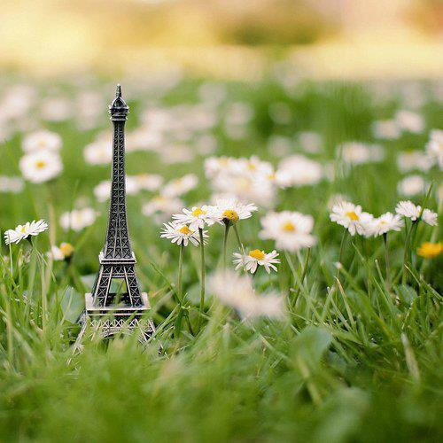cute, flowers, i was born a champion, paris