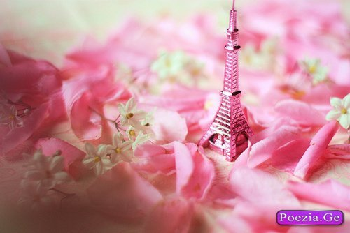 cute, i was born a champion, paris, pink, roses