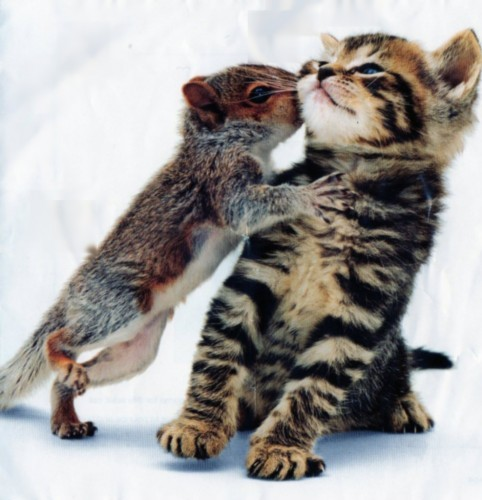 cute, kitten, love, squirrel