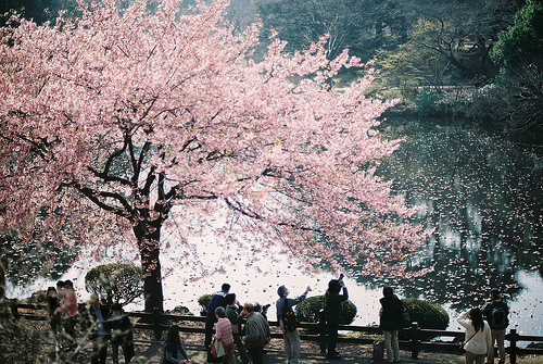 cute, japan, love, pink, tree