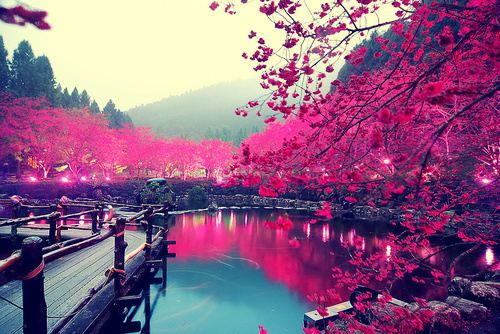 dock, flowers, lake, trees, water