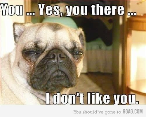 dog, funny, hilarious and i don;t like you