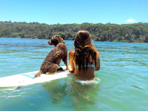 dog, girl, mar, verao