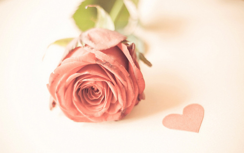fashion, france, heart, love, lovely, nature, photography, pink, pretty, rose, roses, style, vintage
