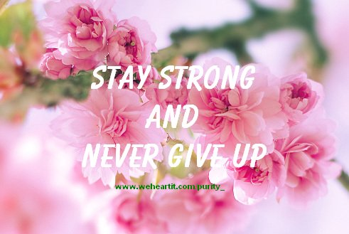 flowers, never give up, quote, strength, text