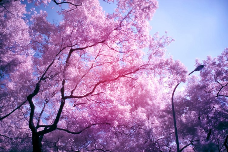 flowers, purple, trees