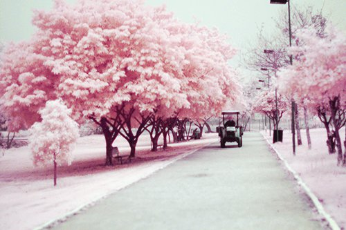 photography, pink, trees, vintage